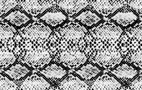 Black & White Snake Print